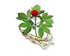 Ginseng root to increase potency